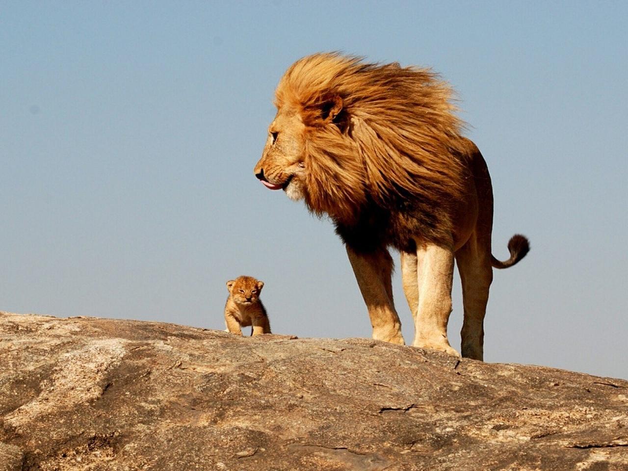 Cub-Lion-Growth-Youth-Rx-2.20.18.jpg