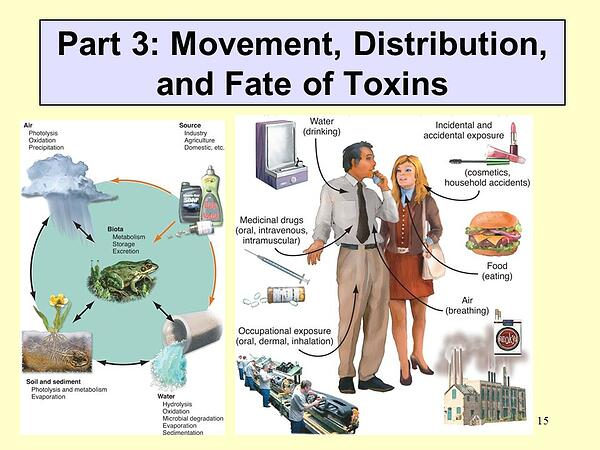 Environment-Endocrine-Health-Disruptors