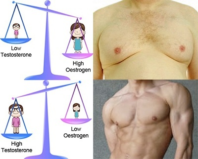 Oestrogen_Testosterone_Ratio.jpg